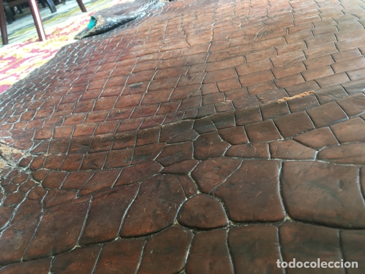 Antigüedades: Alfombra cocodrilo caimán antigua - Foto 5 - 176649469