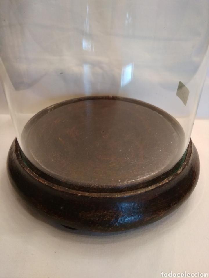 Antigüedades: Pastorcilla de terracota (nuevo) con fanal - Foto 4 - 177564992