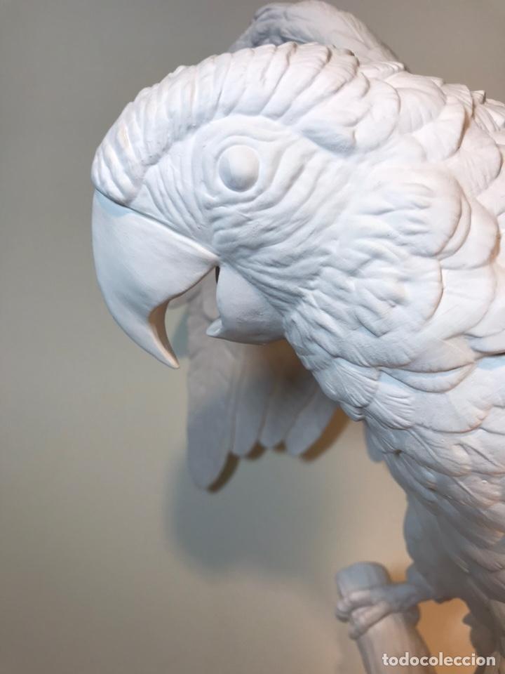 Antigüedades: Figura Porcelana Biscuit- España- Algora- Guacamayo- 55 cm (Loro Papagayo) - Foto 13 - 177817077