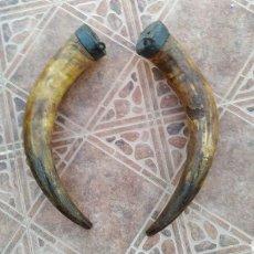 Antigüedades: CUERNOS DE TORO PAREJA. Lote 178252178