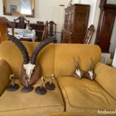 Antigüedades: TROFEOS CAZA. Lote 179188842