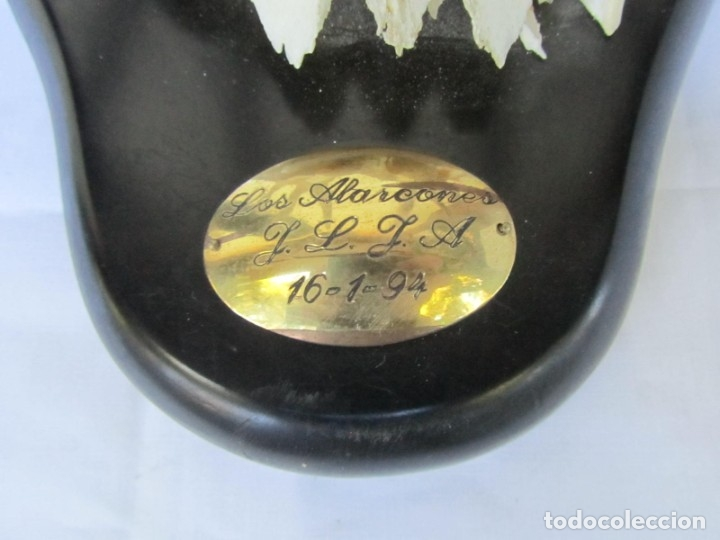 Antigüedades: Cornamenta de ciervo sobre placa de madera Los Alarcones, Andujar Jaén, 1994 - Foto 5 - 181037607