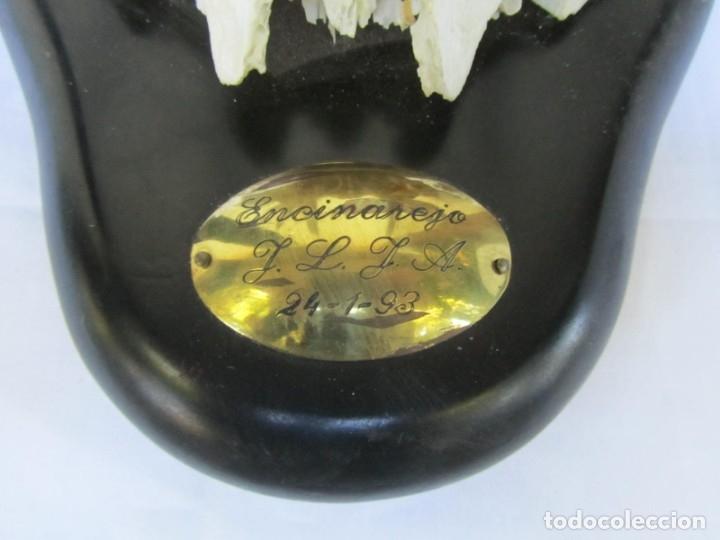 Antigüedades: Cornamenta de ciervo sobre placa de madera Los Alarcones, Andujar Jaén, 1993 - Foto 5 - 181037658