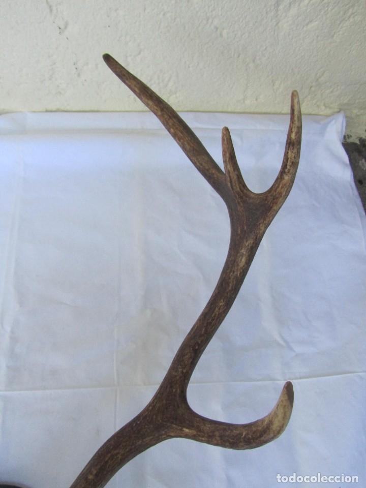 Antigüedades: Cornamenta de ciervo sobre placa de madera Los Alarcones, Andujar Jaén, 1993 - Foto 7 - 181037658
