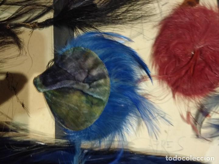 Antigüedades: Lote antiguas plumas copete sombrero p. Siglo XX. - Foto 11 - 190170463