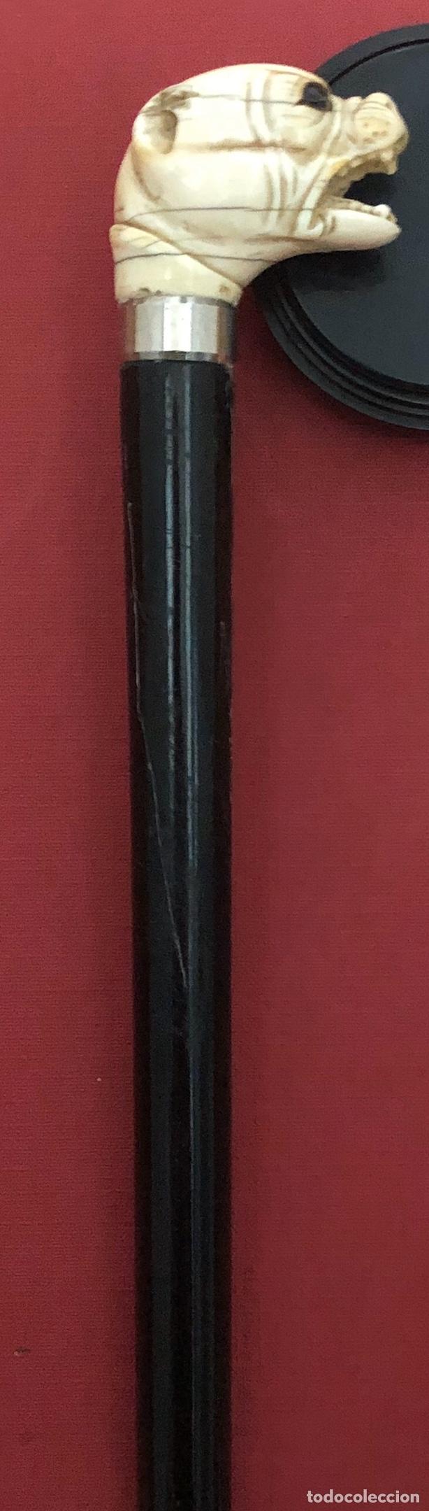 Antigüedades: Antiguo bastón en madera ebonizada, y empuñadura, en hueso o marfil. - Foto 6 - 242344950