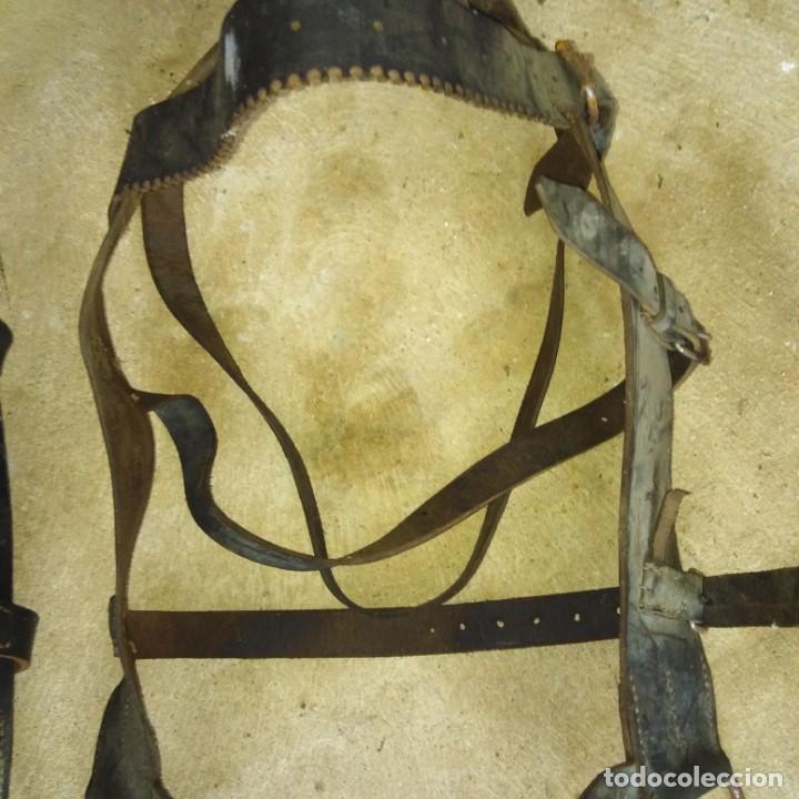 Antigüedades: Pareja de Cabezadas para caballerias - Foto 7 - 191751501