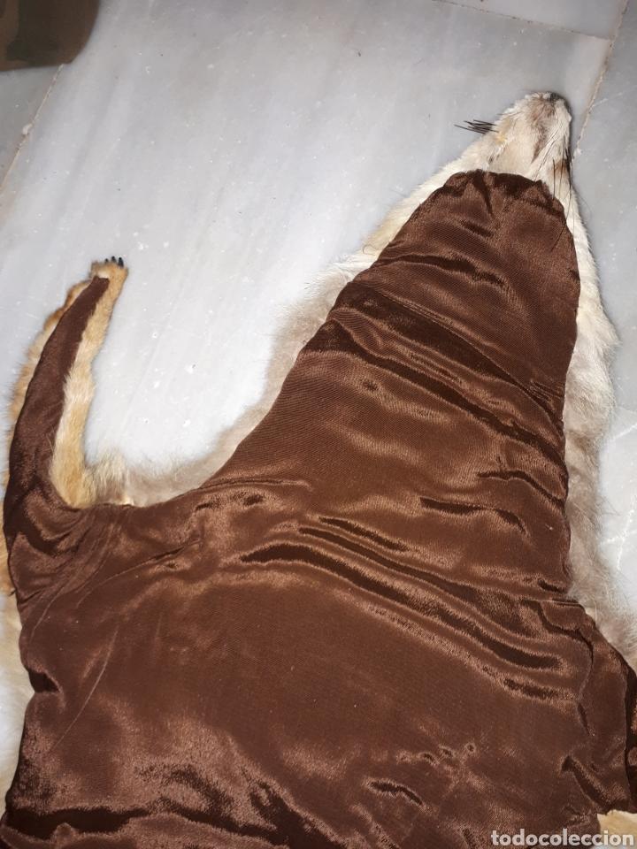 Antigüedades: Piel de zorro taccidemia - Foto 8 - 193967595