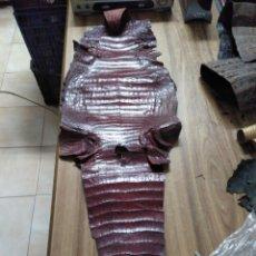 Antigüedades: MFF.- PIEL DE COCODRILO MARRON DE 1.05X0.32 MTS.-. Lote 195331601
