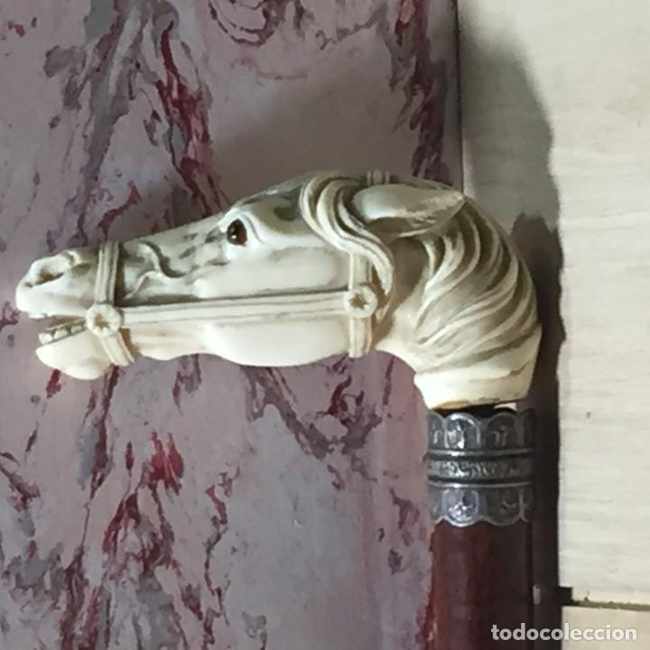 Antigüedades: baston virola plata pomo marfil caballo cabeza calidad ojos vidrio fin s xix ppio s xx 5x11x4cms - Foto 2 - 201164282
