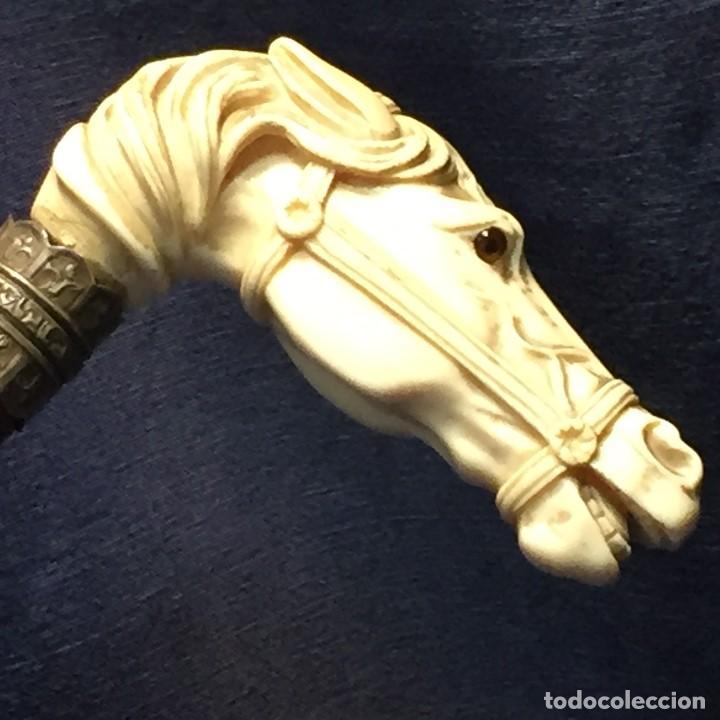 Antigüedades: baston virola plata pomo marfil caballo cabeza calidad ojos vidrio fin s xix ppio s xx 5x11x4cms - Foto 10 - 201164282