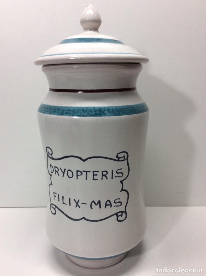 ALBARELO DRYOPTERIS-MAS FILIX 29X12CM 2500/684 REF3 (Antigüedades - Porcelanas y Cerámicas - Otras)
