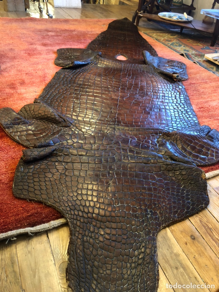 Antigüedades: Antigua Alfombra piel cuero cocodrilo caimán casi 4 metros - Foto 3 - 176649469