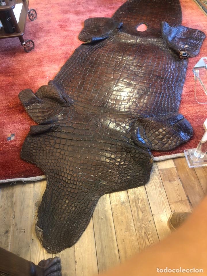 Antigüedades: Antigua Alfombra piel cuero cocodrilo caimán casi 4 metros - Foto 4 - 176649469