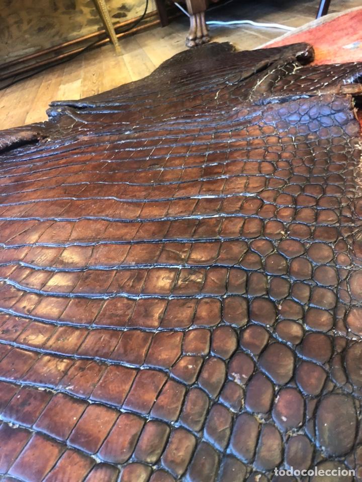 Antigüedades: Antigua Alfombra piel cuero cocodrilo caimán casi 4 metros - Foto 6 - 176649469