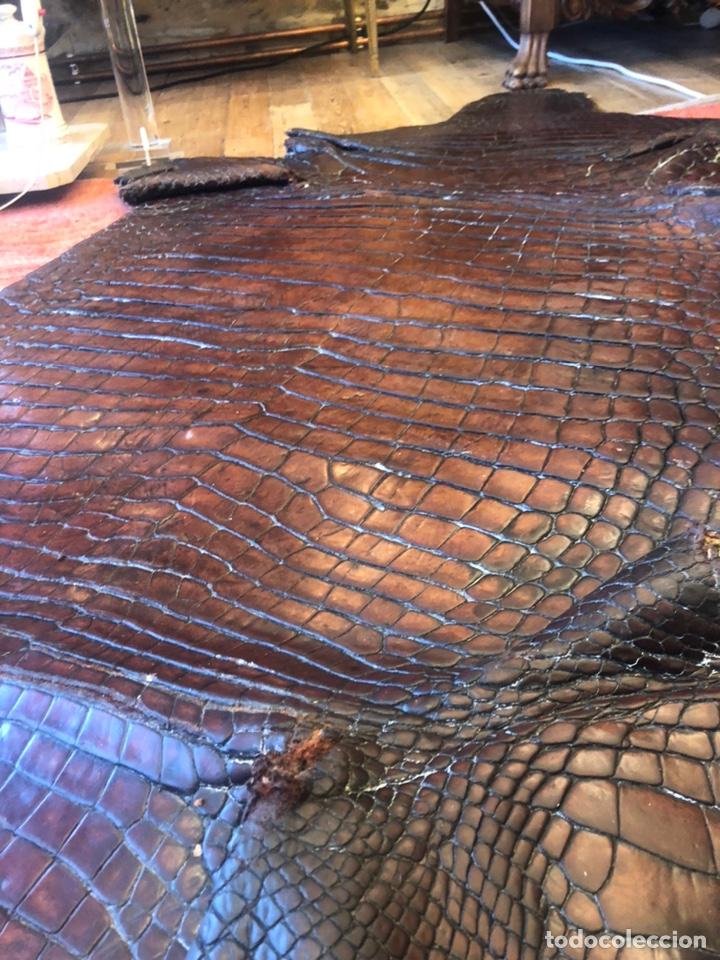 Antigüedades: Antigua Alfombra piel cuero cocodrilo caimán casi 4 metros - Foto 7 - 176649469