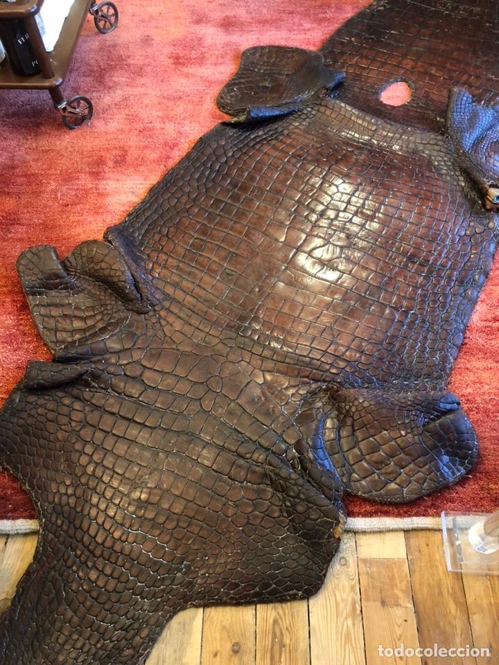 Antigüedades: Antigua Alfombra piel cuero cocodrilo caimán casi 4 metros - Foto 8 - 176649469