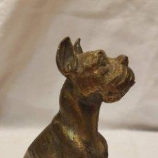 Antigüedades: PERRO DORADO ALTURA 9 CMTS. Lote 203870385