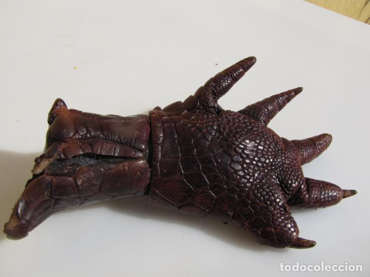 Antigüedades: 6- Garra o zarpa de aligator. Piel curtida - Foto 6 - 204590475