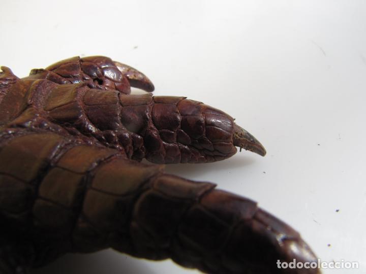 Antigüedades: 6- Garra o zarpa de aligator. Piel curtida - Foto 9 - 204590475