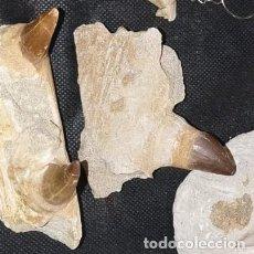 Antiquités: MANDÍBULA PARCIAL DE MOSOSAURIUS. Lote 205087901