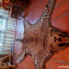 Antigüedades: ANTIGUA PIEL DE LEOPARDO AFRICANO PRE-CITES. Lote 205326425
