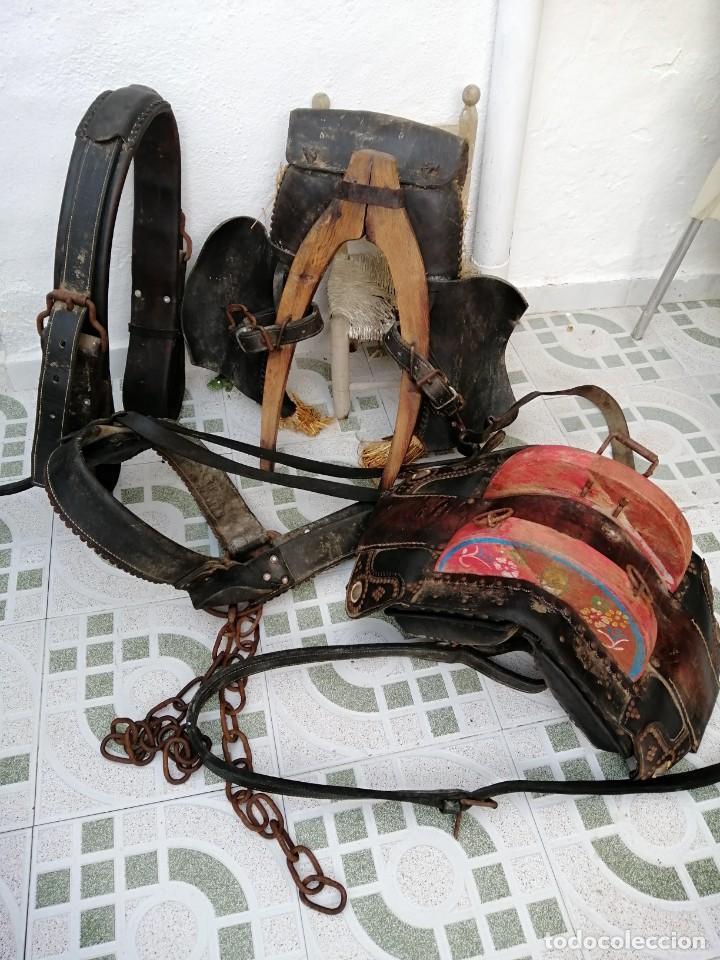 Antigüedades: silla de burro o mula mas jamuga y con correajes etc ver fotos - Foto 2 - 206169942