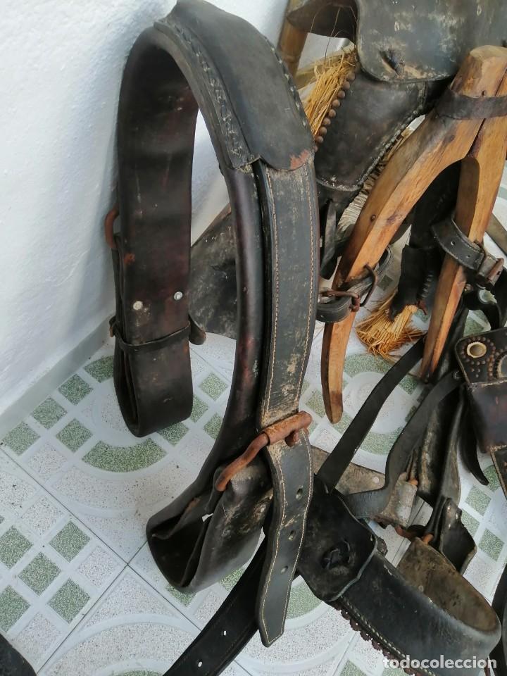 Antigüedades: silla de burro o mula mas jamuga y con correajes etc ver fotos - Foto 5 - 206169942