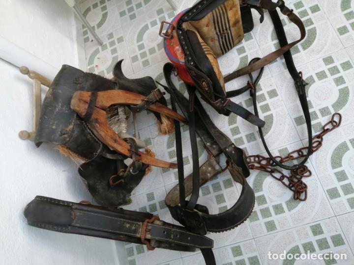 Antigüedades: silla de burro o mula mas jamuga y con correajes etc ver fotos - Foto 10 - 206169942