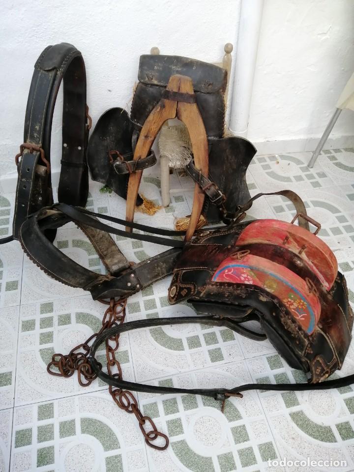 Antigüedades: silla de burro o mula mas jamuga y con correajes etc ver fotos - Foto 13 - 206169942