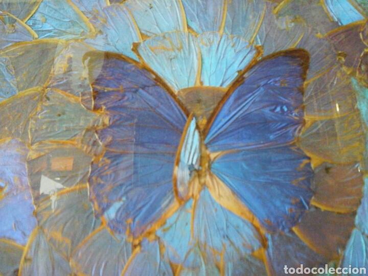 Antigüedades: Bandeja mariposas (Brasil) - Foto 2 - 207739215