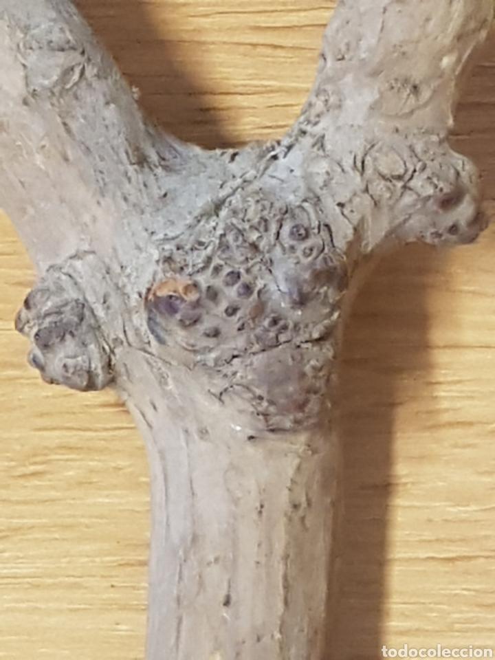 Antigüedades: Singular tirachinas arte pastoril de pastor madera - Foto 2 - 208154328
