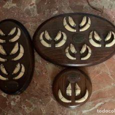 Antiguidades: COLMILLOS DE JABALÍ. Lote 209016375