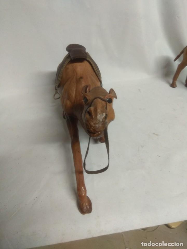 Antigüedades: Pareja de dos raros camellos forrados en símil piel. - Foto 6 - 213506331