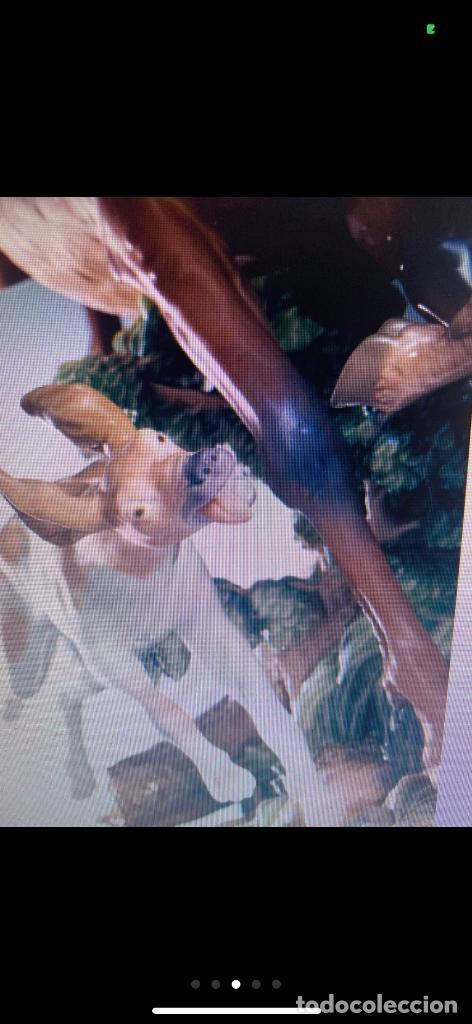 Antigüedades: Ciervos perseguidos Lladro - Foto 3 - 213803215
