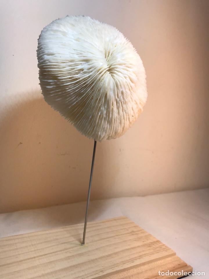 Antigüedades: Figura Adorno de Coral con base de madera. (1) - Foto 3 - 214192395
