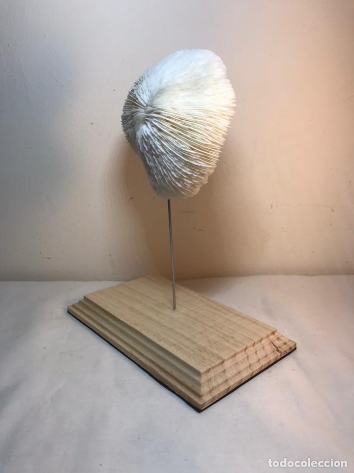 Antigüedades: Figura Adorno de Coral con base de madera. (1) - Foto 7 - 214192395