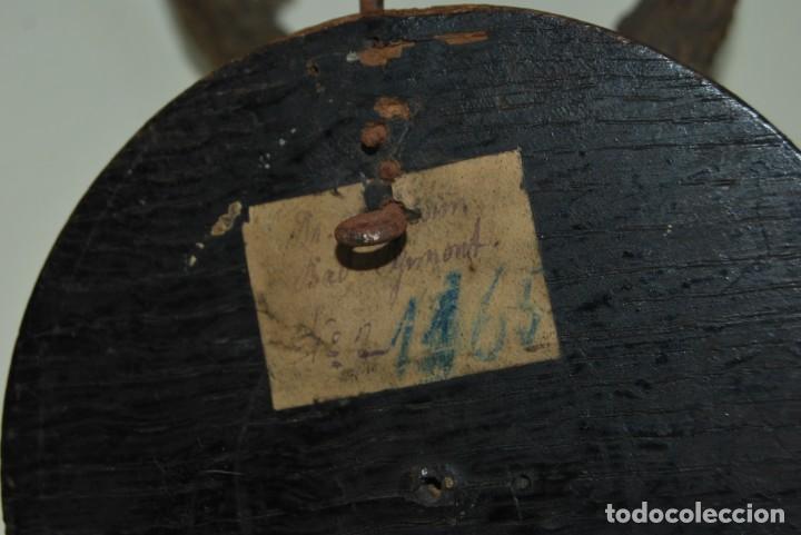 Antigüedades: CORNAMENTA DE CORZO - CUERNO - ASTA - TROFEO DE CAZA - AÑO 1907 - Foto 10 - 217677667