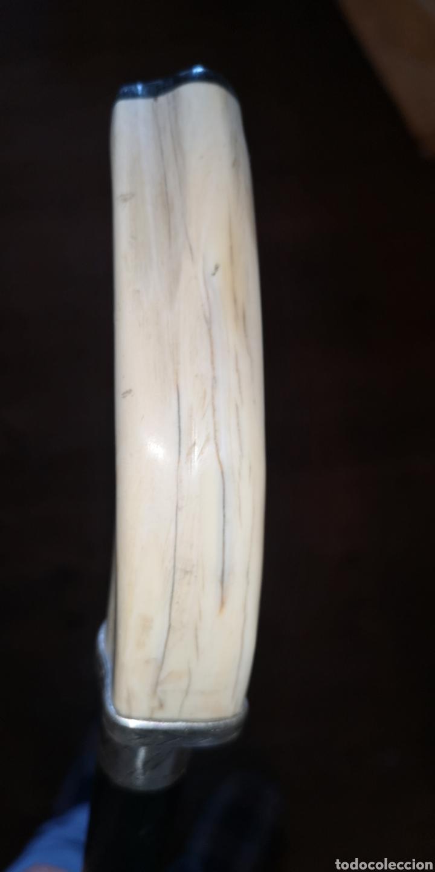 Antigüedades: Antiguo bastón realizado con colmillo de facochero plata y palosanto o ebano - Foto 4 - 222018305