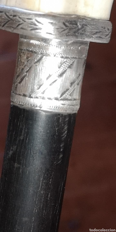 Antigüedades: Antiguo bastón realizado con colmillo de facochero plata y palosanto o ebano - Foto 5 - 222018305