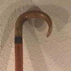 Antigüedades: ANTIGUO BASTON DE MADERA CON EMPUÑADURA DE ASTA DE TORO. Lote 223856410