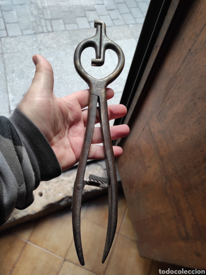 Antigüedades: Antiguas Tenazas - Pinzas Capadoras - Castradoras - - Foto 3 - 234765045