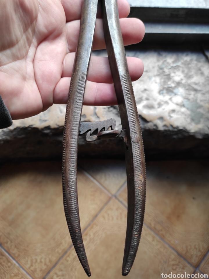 Antigüedades: Antiguas Tenazas - Pinzas Capadoras - Castradoras - - Foto 6 - 234765045