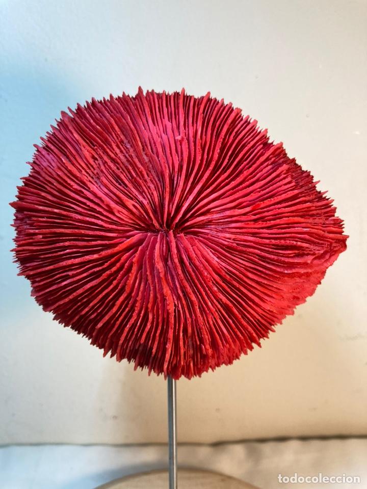 Antigüedades: Adorno de Coral Rojo con base madera (3) - Foto 2 - 235152570