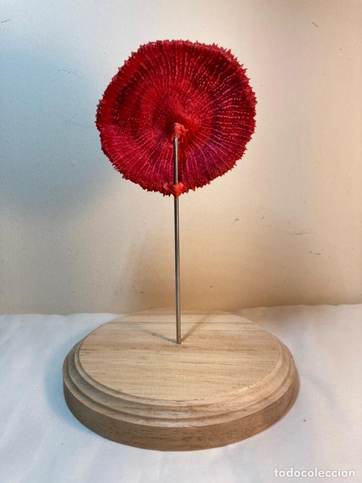Antigüedades: Adorno de Coral Rojo con base madera (3) - Foto 8 - 235152570