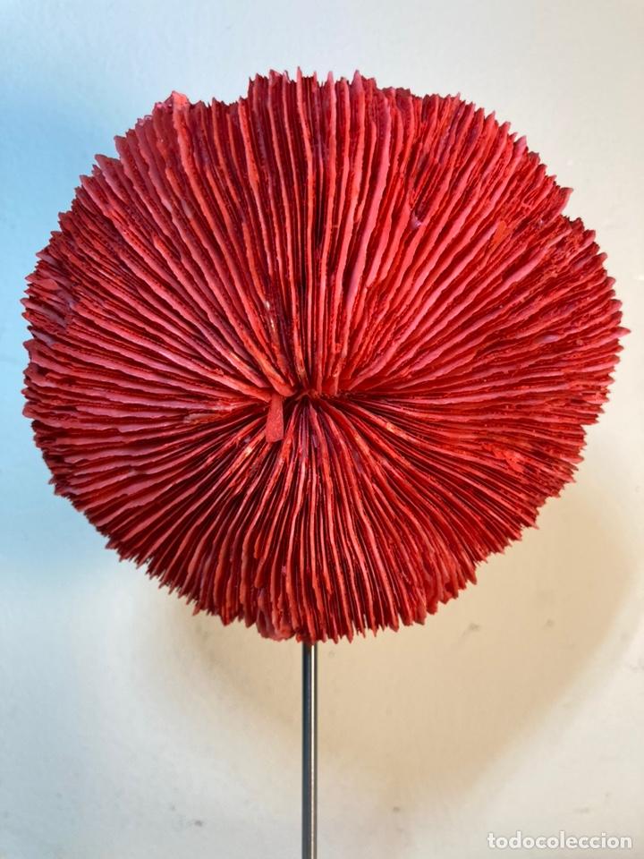 Antigüedades: Adorno de Coral Rojo con base madera (4) - Foto 2 - 235153190