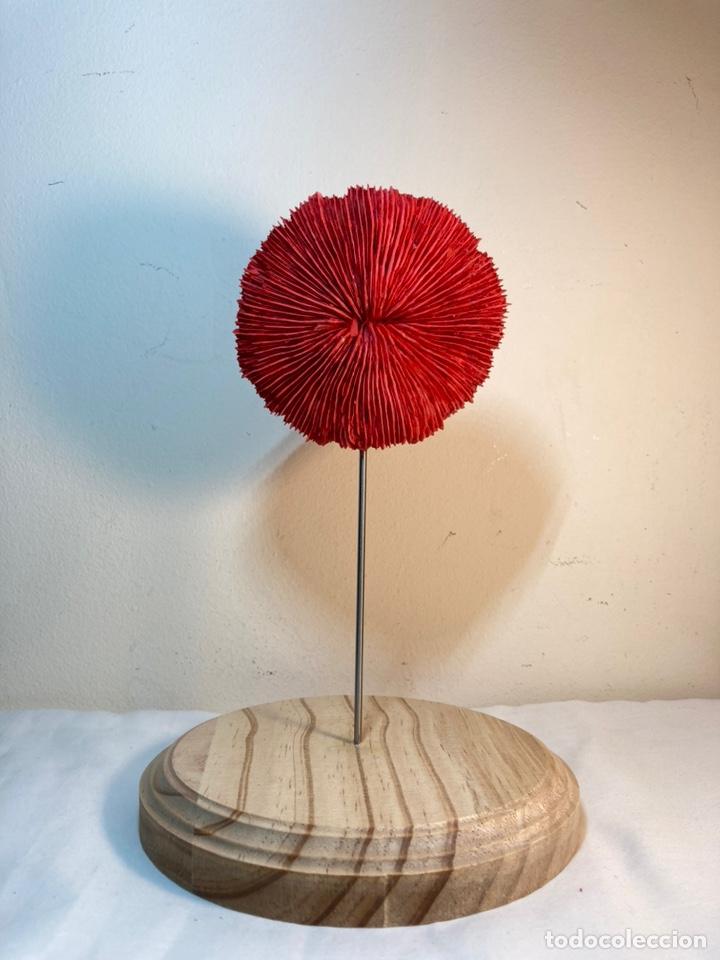 Antigüedades: Adorno de Coral Rojo con base madera (4) - Foto 4 - 235153190