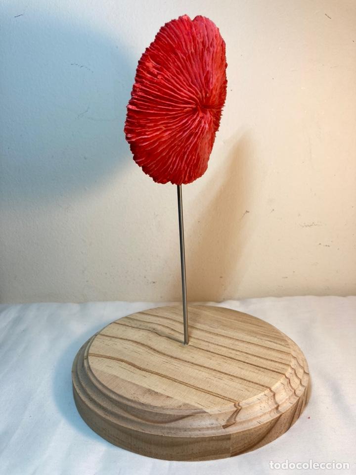 Antigüedades: Adorno de Coral Rojo con base madera (4) - Foto 5 - 235153190