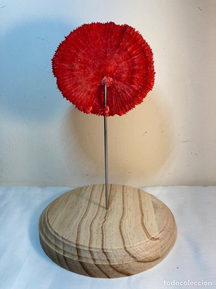 Antigüedades: Adorno de Coral Rojo con base madera (4) - Foto 8 - 235153190