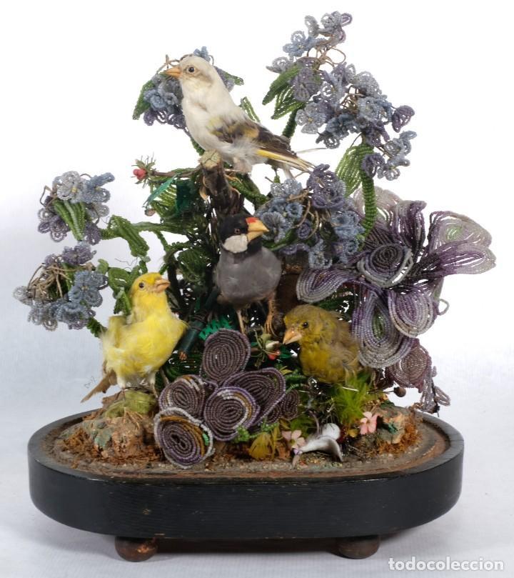 Antigüedades: Conjunto Pájaros disecados taxidermia siglo XIX - Foto 2 - 243865560